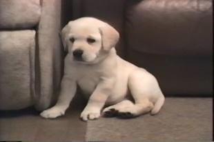 ◆動画「Puppy Makes History」のイメージ
